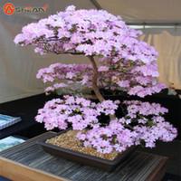 Японский Сакура семена бонсай цветок вишни цветет вишня дерево декоративные растения 10 частиц / лот