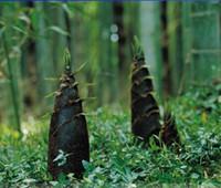 가 보 중국 Moso 대나무 맛있는 야채 씨앗, 전문 팩, 30 종자 / 팩, 다년생 대나무 식용 E3179 촬영