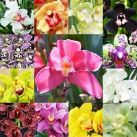 13 видов цвет цветок орхидеи семена горшечных цветов Цимбидиум Faberi семена балкон горшке семян посадить 1 мешок 100 шт