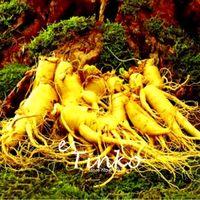 Changbai Гора женьшень семена женьшень семена бонсай завод DIY редкие растения Главная сад Бесплатная доставка