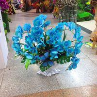 도매 200 블루 나비 난초 씨앗 아름다운 정원 호접란 난초 분재