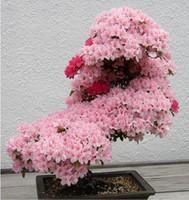 Semi di sakura giapponese albero bonsai. raro fiore di ciliegio giapponese semi di fiori in bonsai, rosa semi di Prunus Serrulata15 / confezione