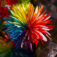 Радужная хризантема Семена цветов Семена бонсай для домашнего сада 50 частиц / серия Q037