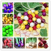 체리 벨 무 씨앗 고품질 쉬운 홈 정원 (50) PC 용 유기 맛있는 야채 야외 식물 냄비 성장
