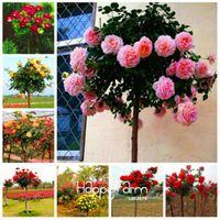 최저 가격 ! 100 PC / 가방 정품 신선한 희귀로 사 Chinensis Dendroidal 장미 꽃 나무 씨 믹스 색상 귀하의 정원 위로 장미