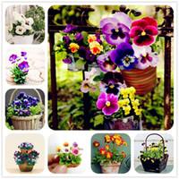 100 unids / pack Mini semillas pensamiento Triangulo Ondulado Viola Tricolor Semillas de Flores Envío Gratis bonsai planta en maceta para el jardín de DIY