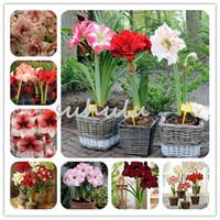 100 بذور قطع أماريليس، (لا الأمارلس لمبات)، بذور بونساي زهرة الزنبق Hippeastrum بربادوس مصنع للمنزل حديقة 10 يمكنك اختيار الألوان
