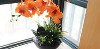 1 개 세트 오렌지 색상 난초 천 꽃과 함께 잎 인공 난초 배열 없음 꽃병 장식 꽃 화환