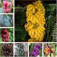 200 pcs Rare graines de banane, graines de bonsaï, 10 couleurs à choisir, graines de Heirloom bio, plante pour jardin