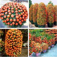 50 pezzi / sacchetto Semi arancioni arrampicata semi di albero arancione bonsai Semi di frutta biologici Come un vaso di albero di Natale per la casa pianta da giardino