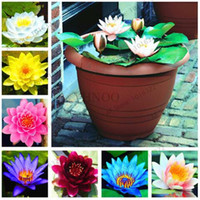 e9c673697423 New Arrival. 10 pcs bag lotus flower lotus seeds Aquatic plants bowl lotus  water lily seeds Perennial Plant for home garden ...