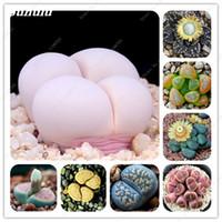 200 Teile / paket, seltene Gemischt Lithops Samen Living Stones Sukkulenten Kaktus Bio Garten Groß Blumensamen Seltene Form Bonsai Pflanze Für Balkon