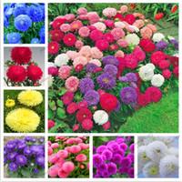 120 Шт. / Пакет Многоцветные Семена Астры Китайский Цветок Хризантемы Для Дома Гаден Завод Высокий Рост Легко Расти