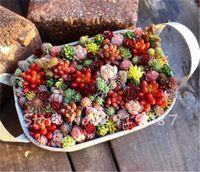 100 PCS / Bag Mix Lithops Sementes raros Sementes suculentas Ass sementes de flores Pseudotruncatella Pedra viva Bonsai Mini jardim de plantas
