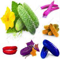 희소 한 다채로운 일본 오이 종자 정원 식물을위한 과일 야채 씨앗 분재 세멘 드 Semillas de Verduras-100 개 / 백