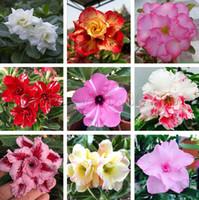 1 PCS Unique Réel Desert Rose bonsaï Fleurs Graine Belle Couleur Plantes Ornementales Balcon Plantes En Pot Adenium Obesum