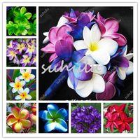 Venda quente 50 Pcs Plumeria Hawaiian Foam Frangipani Flor Para Festa De Casamento Decoração Romance Exótico Ovo Sementes de Flores Tão Bonito