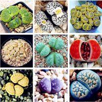 100 Rare Mix Lithops Graines Living Stones Succulent Cactus Organic Garden Bulk Seed, graines de bonsaï pour plantes succulentes d'intérieur
