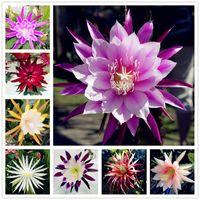 Nueva llegada 2017! 100 PCS Epiphyllum Semillas de Flores Bonsai Semillas de Cactus de Orquídeas Raras Jardín Decoración Planta Fácil de Cultivar Envío Gratis