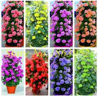 Hot 100 Teile / beutel Mehrere Farbe Geranium Seeds Mehrjährige Klettern Blumensamen Pelargonie Indoor Beauty Blume Pflanze Für Garten