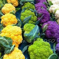 Freies Verschiffen 50 PC Snowy-Blumenkohl-Samen-Gemüse-nicht hybrider Brokkoli sät grünes Gesundheits-Gemüse für Hausgarten