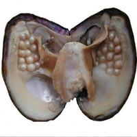 Big Oyster Perle 8 Jahre Aquakultur 20-30 Stück Perlen einzeln vakuumverpackt Kultivierte Frisch Oyster Farm Supply DHL-freies Verschiffen