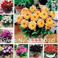 100 Unids / bolsa Potted Dahlia Flower Gorgeous Dahlia Seeds Varias Semillas Bonsai Flower Seeds también llamada Chinese Peony Garden Plant