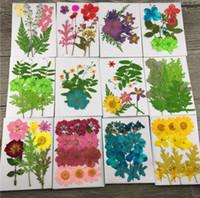 Venta al por mayor-Mezcla de flores secas prensadas + Hojas de hoja Plantas Herbario Para joyería Tarjeta postal Marco de fotos Estuche para teléfono Bricolaje 12 diseños Escoger
