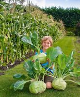 Los Países Bajos importaron semillas de colinabo hortalizas semillas de vegetales verdes 50 unids Envío Gratis
