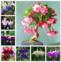 100 pçs / saco fúcsia sementes, flor fúcsia, bonsai Flores Penduradas sementes, vasos de plantas Lanterna Begonia sementes para casa jardim