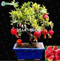 30 Pz Bonsai Semi di Melograno Molto Dolce e Delizioso Semi di Frutta, semi di Albero di Succulente Così Delizioso Mini Bonsai Per La Casa regalo