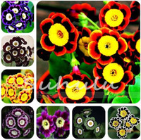 50 graines de pétunia pérennes, fleurs en pot de pétunia, graines de bonsaï d'extérieur, pot de plante de croissance naturelle pour le jardin