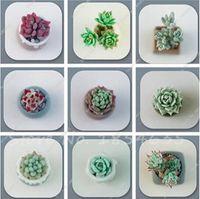 100 قطع نادرة كريستال واضح الجمال العصارة بذور سهلة لتنمو بوعاء نباتات الزينة للمنزل حديقة فناء الشحن مجانا