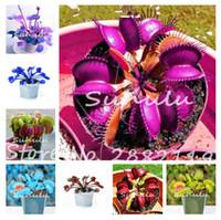 10 개 파란 이국적인 식충 식물의 씨앗 다육 식물 Dionaea Muscipula 분재의 씨앗 금성 파리의 함정 파리의 육식 식물 쉬운 성장