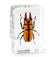 Böceği Örnekler Akrilik Reçine Gömülü Gerçek Böcek ÖğrenmeEğitim OyuncaklarHediyeler Şeffaf Fare Paperweight Çocuklar Biyolojik Bilim Kitleri