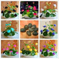 Venda quente 10 Sementes / Pack Tigela Sementes de Lótus Plantas Hidropônicas Plantas Aquáticas Sementes de Flores Planta Perene Para Casa Em Vasos de Plantio