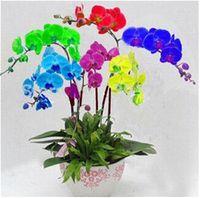 30 шт. мини бонсай орхидеи семена, Радуга бабочка орхидеи семена, крытый дом миниатюрный цветочный горшок садовые растения четыре сезона Фаленопсис