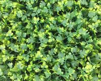 الأخضر الجدار uv العشب الاصطناعي العشب داخلي / 60 سنتيمتر x 40 سنتيمتر وهمية العشب الديكور البقس واقعية تبحث حديقة الحديقة الطبيعية 125-8010