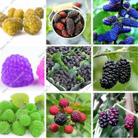 Raspberry Seed Mulberry Black Berry Blackberry Seed Stratified Fruit, The Germination Rate 95% Bonsai Tree Seedling Seed 200 Pcs for sale