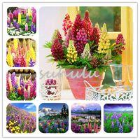 Acheter Lupin Lupinus Polyphyllus Plantes Vivaces Graines Diy Maison