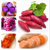 50 Adet / torba Tatlı Patates Tohumları Sebze Tohumları Taze Gıda Meyve Ve Sebze Bahçe Malzemeleri Bonsai Bitki Ev Bahçe Için