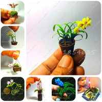 Распродажа! 50 шт. мини Орхидея бонсай семена цветов, офисные настольные цветы, комнатные садовые растения четыре сезона посадки редкие подарки для детей