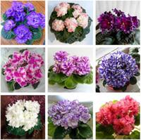 100 teile / beutel Echte afrikanische violette samen, bonsai blumensamen für hausgartenpflanze Mehrjährige Kräuter hohe knospende topfpflanzen