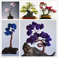 Sıcak Satış 120 Adet Mini Bonsai Ağacı Japon Sakura Tohumları, Bonsai Çiçek Kiraz Çiçekleri Ev Graden Dekorasyon Ücretsiz Kargo