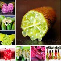 50 PC의 분홍색 손가락 과일 라임 씨앗 희귀 한 석류 씨앗, 분재 과일 씨앗, 스위트 정원에 대한 식물 정원 발코니 희귀 식물