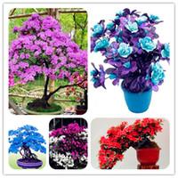 Azalea japonesa Semillas Plantas Mixtas de Interior Oficina de Escritorio Cubierta Ornamental Flor Bonsai Diy Planta Home Garden 100 Unids