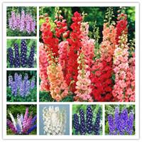 50 PC Delphinium 씨앗 새로운 믹스 포장 꽃 자이언트 Consolida Ajacis 정원 꽃 식물 분재 나무 Semillas