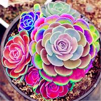 50 pcs Mix Succulent seeds lotus Lithops Pseudotruncatella Bonsai plants Seeds for home & garden Flower pots planters