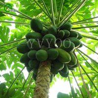 파파야 씨앗 연례 과일 및 야채 .DIY 홈 가든 분재 식물 씨앗. 50 개 / 팩 Z55