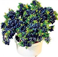 100 개 블루 베리 씨앗 2 가지 색상 블루 레드 분재 블루 베리 나무 과일 야채 씨앗 집 정원용 비 GMO 화분